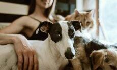 7 a 1? Entenda a relação de idade entre humanos, cães e gatos