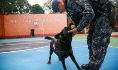 Cadela que atuou em Brumadinho se aposenta, após 5 anos de serviços prestados