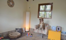 Hotel fazenda no interior de SP oferece tratamento VIP para o seu cão