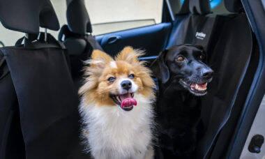Vai viajar com seu cão ou sem ele? Saiba o que fazer nos dois casos