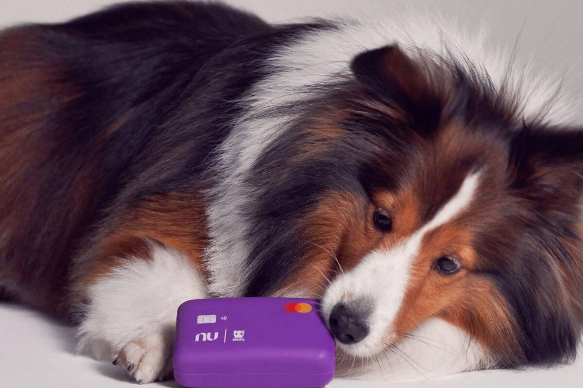 Nubank lança cartão de crédito que o seu cão pode destruir à vontade