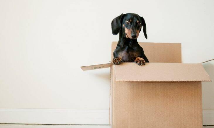 Manual completo para deixar sua casa pronta para receber um novo cão
