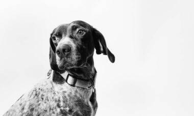Bastante machucada, cadela estuprada por homem recebe a ajuda de moradores no interior de MG