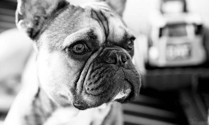 Investigação: tortura animal rende muito dinheiro no YouTube, Facebook e TikTok