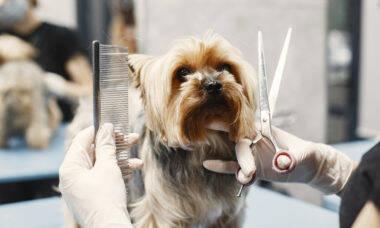 Saiba como tosar seu cão em casa com segurança