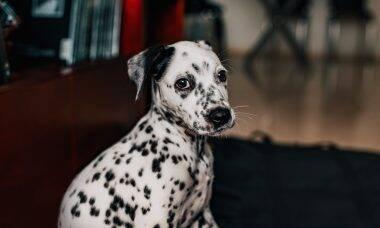 As 10 raças de cães que tendem a sofrer mais com a ansiedade da separação