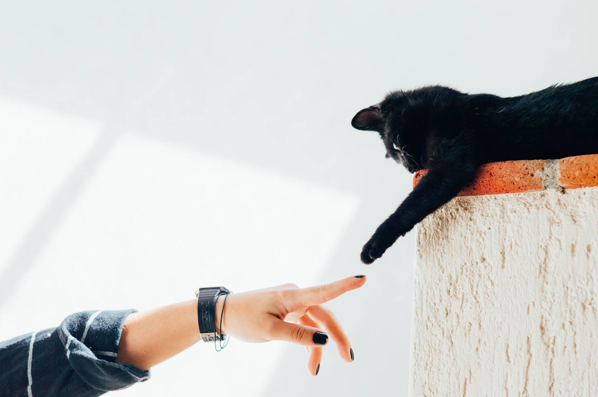 Sexta-feira, 13: entidade combate superstições e crendices contra gatos pretos