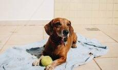 Cães precisam de protetor solar como os humanos?