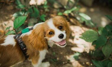 As 10 melhores raças de cães para pessoas que sofrem de ansiedade