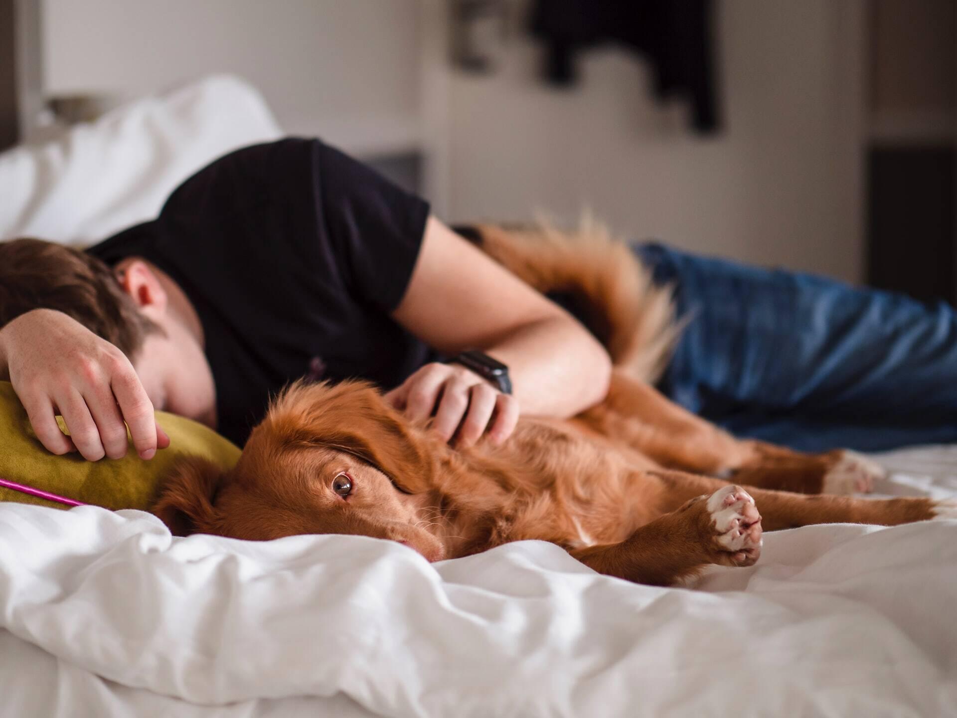 Conheça os prós e os contras de dormir com o seu cão na cama