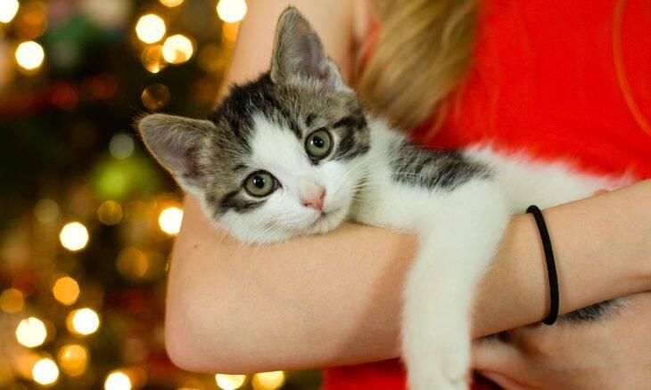 Gatos passam a ser mais adotados que cães nos EUA, mostra levantamento