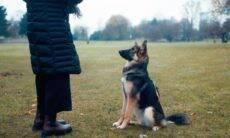 6 dicas indispensáveis para você treinar seu cão do jeito certo