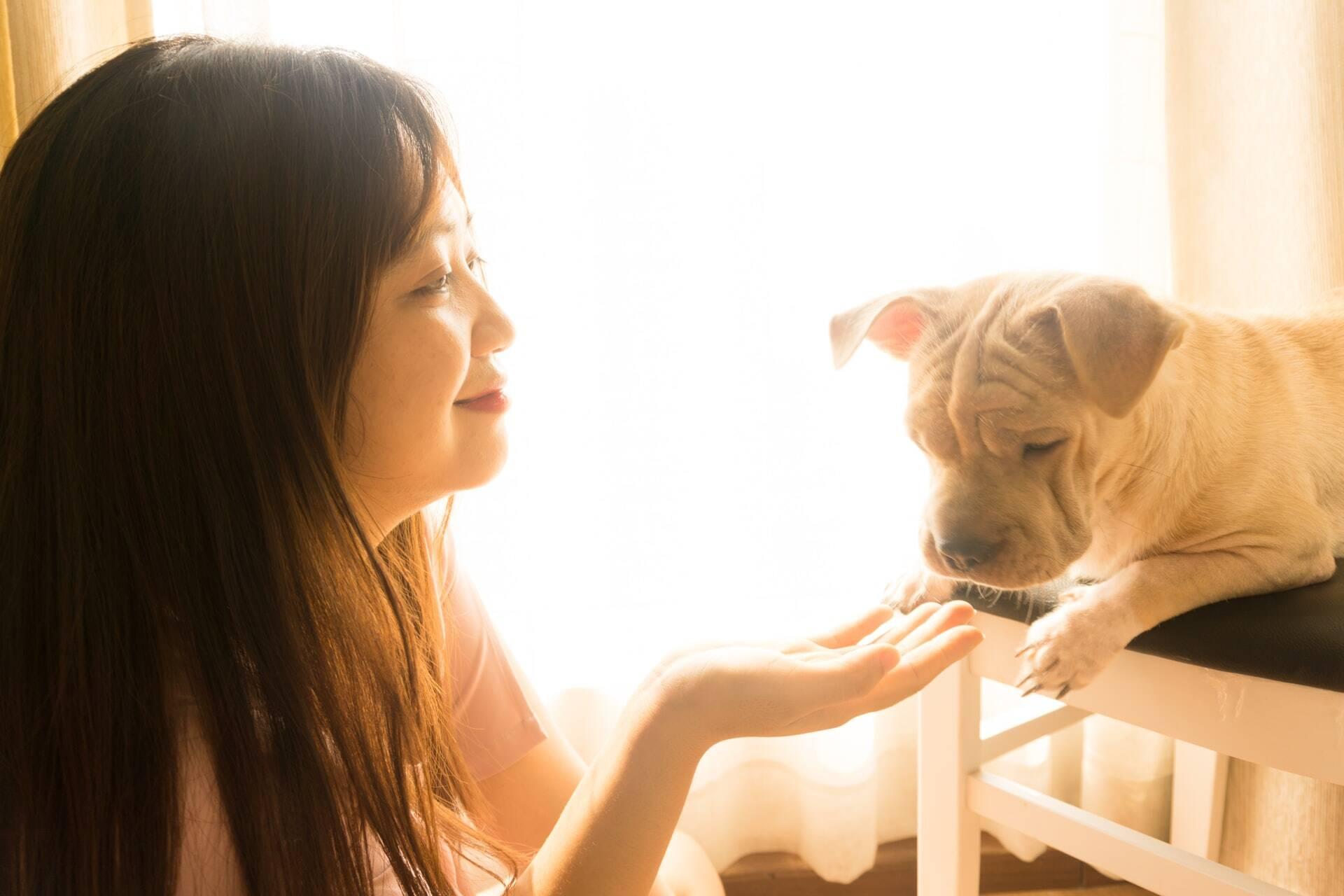 Cães conseguem prever ataques epiléticos em humanos, confirma estudo