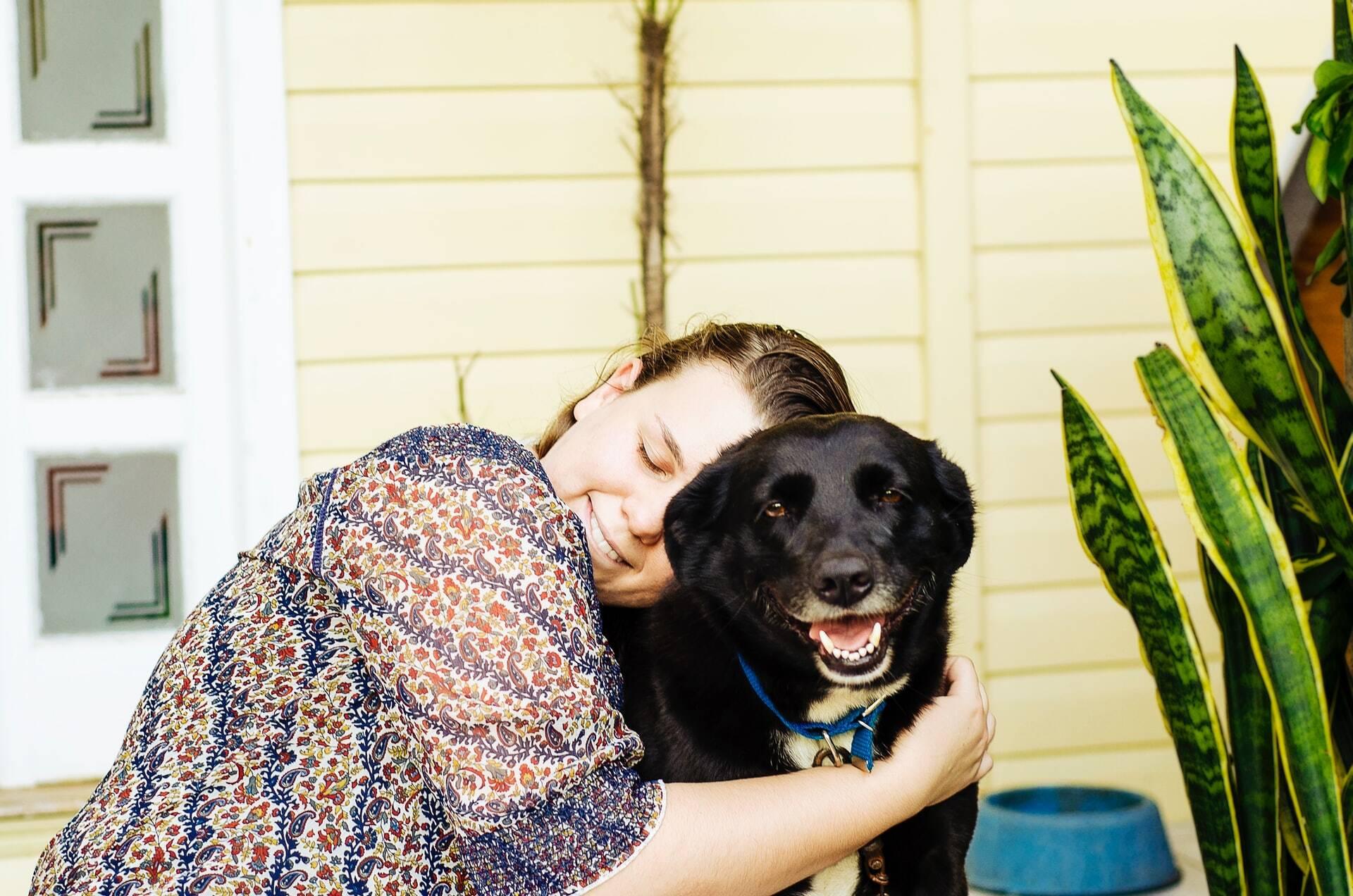 Quer que seu cão viva mais? Não deixe de ler este texto