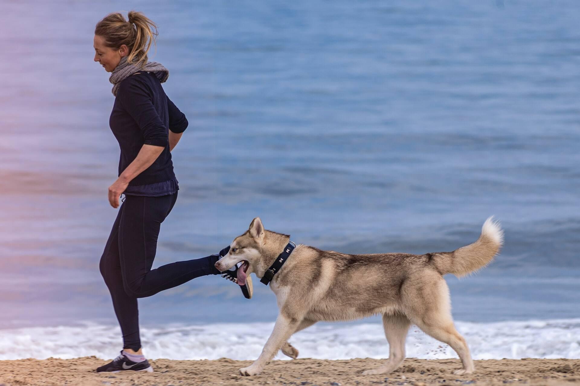 Os cuidados (e os benefícios) de deixar o seu cão em forma