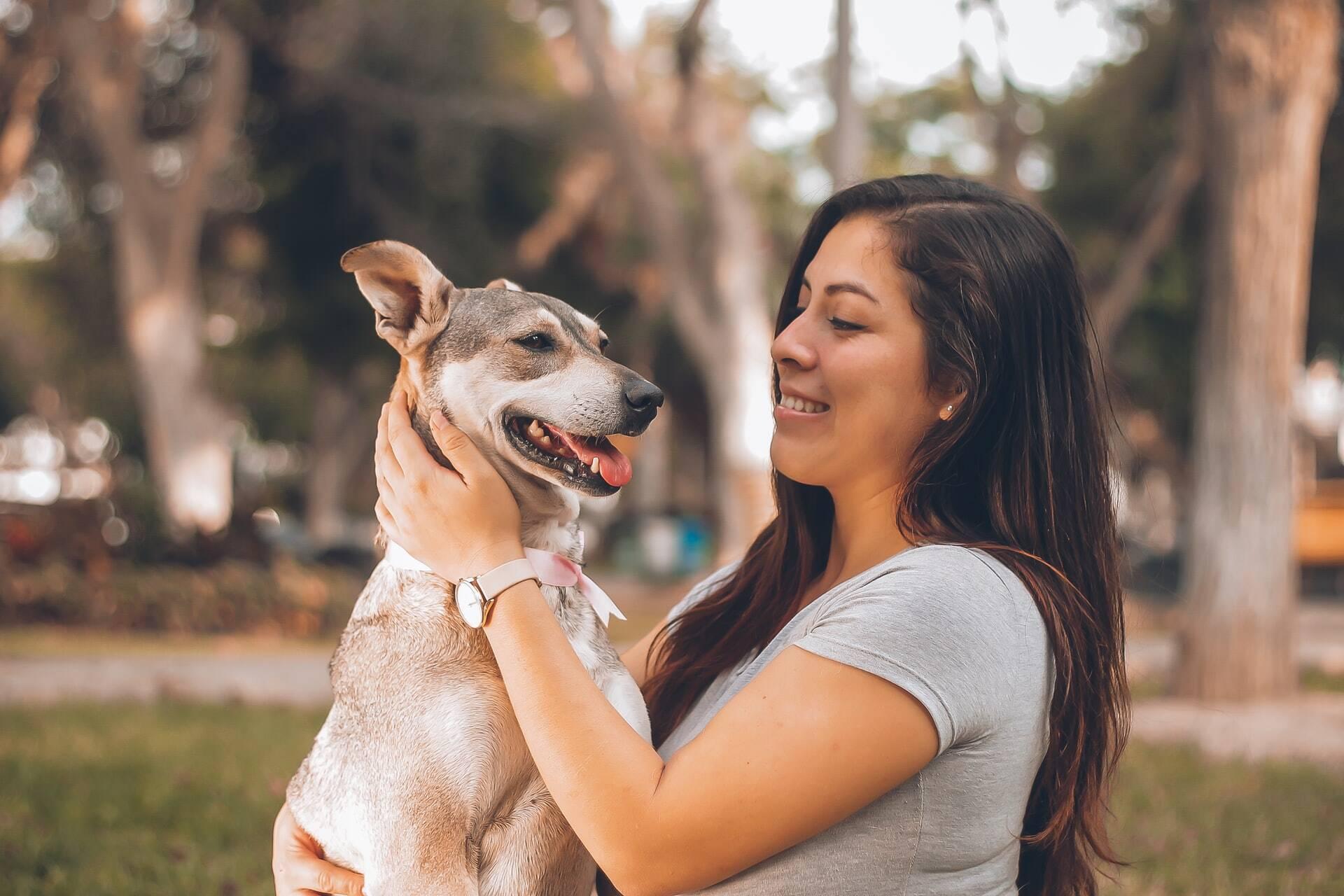 Estudo mostra que cães nascem prontos para se comunicar com humanos