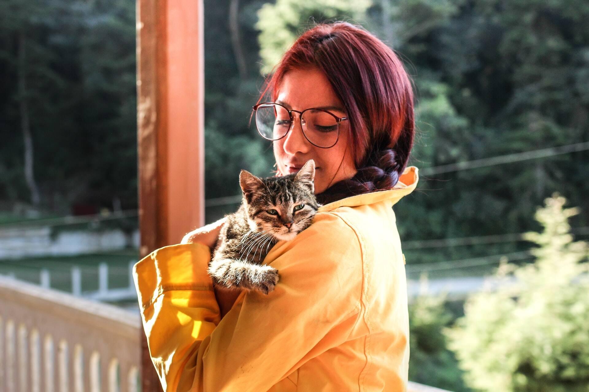 Gatos superam cães e consideram seus humanos como pais, indica estudo