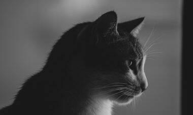 Autoridades investigam ração que pode ter provocado a morte de 300 gatos