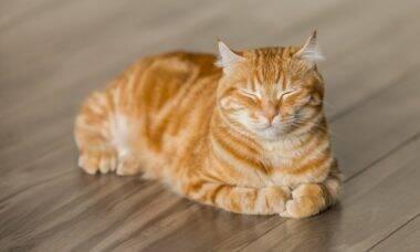 20 coisas que talvez você não saiba sobre os gatos e por que chegou a hora de adotar um