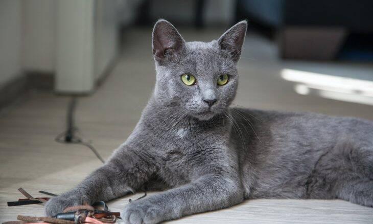 Entenda o que o seu gato tenta dizer pra você quando ronrona