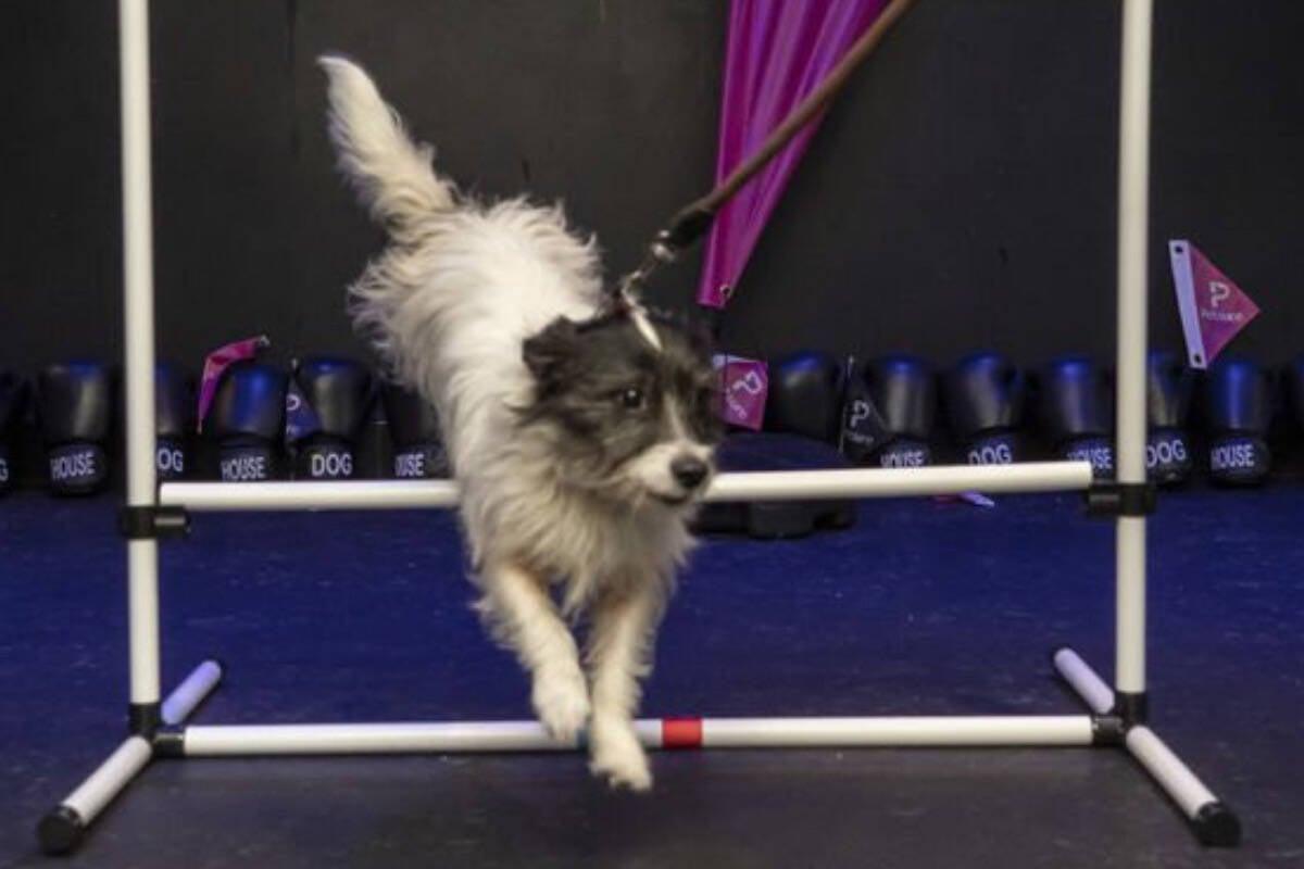 Conheça alguns dos cães que vão disputar a primeira paralimpíada para pets