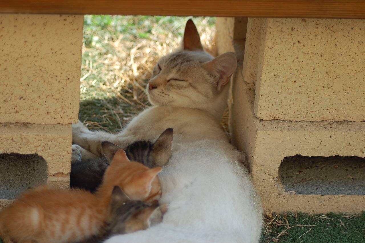 Confira os cuidados com a alimentação de cadelas e gatas durante gestação e amamentação