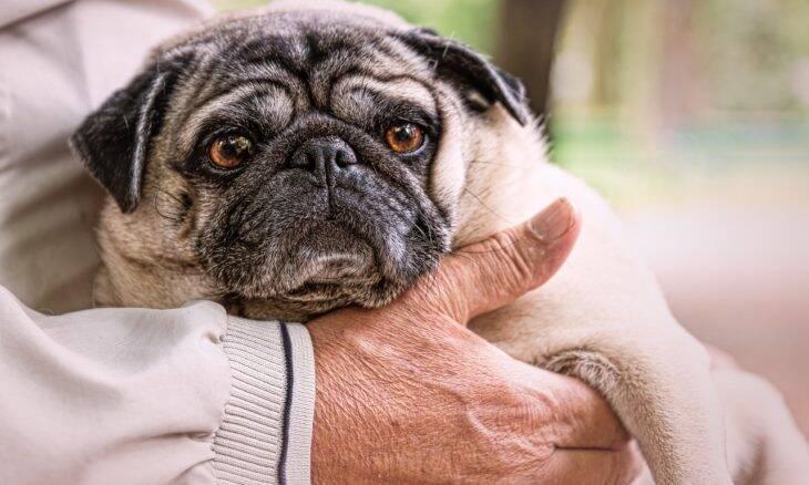 As 10 melhores raças de cães para conviver com humanos idosos