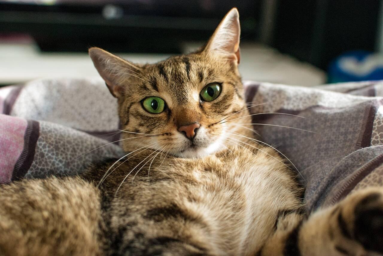 Meu gato é viciado em TV; isso é normal? Especialista responde