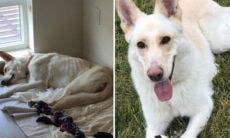 Fotos mostram transformação impressionante em cães antes e depois da adoção