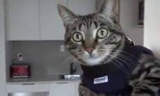 Vídeo: conheça Arnold, o gato mais esperto e bem treinado da polícia