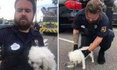 Polícia arromba carro e resgata cão em estacionamento de parque na Disney