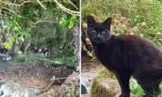Com seus miados, gato salva a vida da dona de 83 anos que caiu em ravina