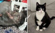 Gata esfaqueada nove vezes sobrevive e tem recuperação milagrosa