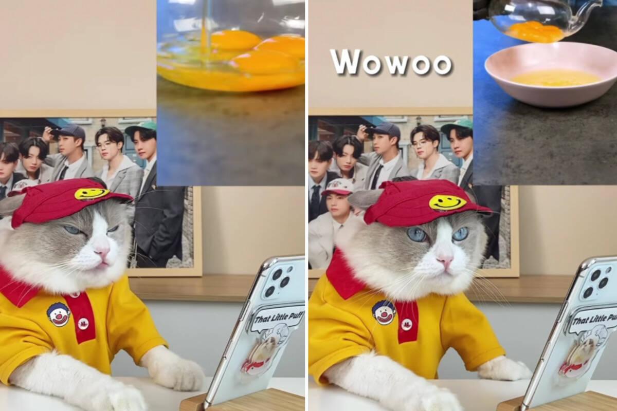Vídeos hilários: gato gourmet 'cozinha' e faz críticas gastronômicas no Instagram