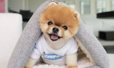 Conheça os cães e gatos mais ricos das redes sociais e saiba quanto eles faturam
