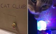 Vídeo hilário: dona monta danceteria para gatos dentro de casa