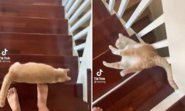 Vídeo hilário: gato usa técnica pouco ortodoxa para descer escada e viraliza