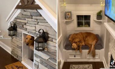 Cão vira celebridade no TikTok por causa de sua casinha... uma mansão, na verdade