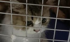 Decisão de sacrificar 154 gatos apreendidos em operação de contrabando revolta a comunidade pet