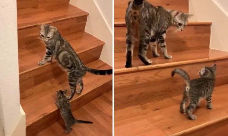 Vídeo: mamãe gata ensina filhote a subir escada e encanta a internet