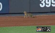 Vídeo: gato interrompe jogo de beisebol, dribla seguranças, é ovacionado pela plateia e viraliza
