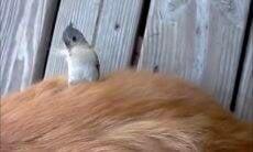 Vídeo: passarinho 'rouba' pelos de cães, gatos e humanos para montar seu ninho