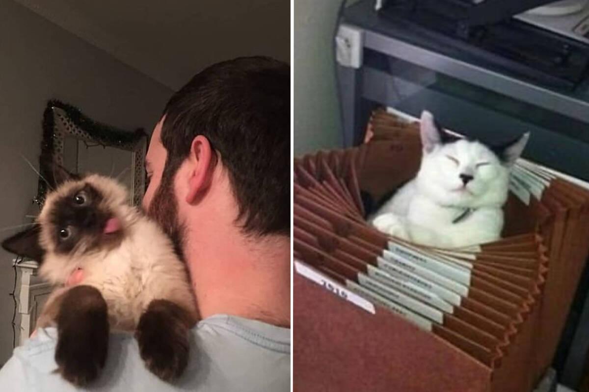 Donos compartilham fotos dos seus gatos nas poses mais absurdas e hilárias