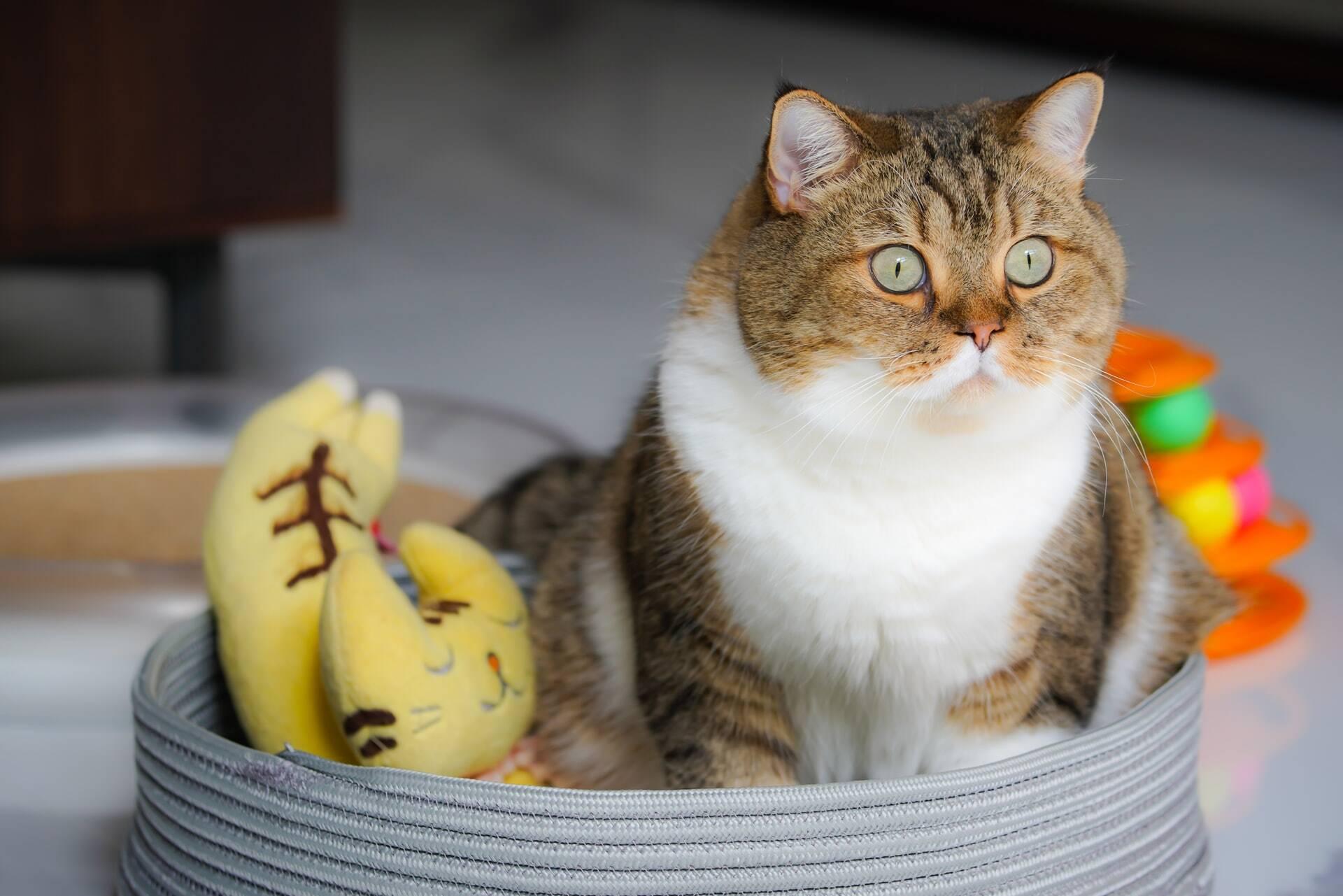 Chega ao mercado medicamento inovador para combater a anorexia em gatos