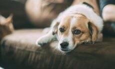 Ração é suspeita de provocar a morte de mais de 130 cães e adoecer outros 220