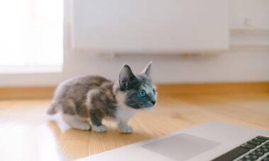 Por que gatos gostam tanto do Zoom? Pergunta intriga donos de bichanos