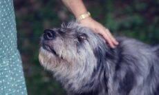 Pesquisa comprova: acariciar um cão faz muito bem para a sua saúde