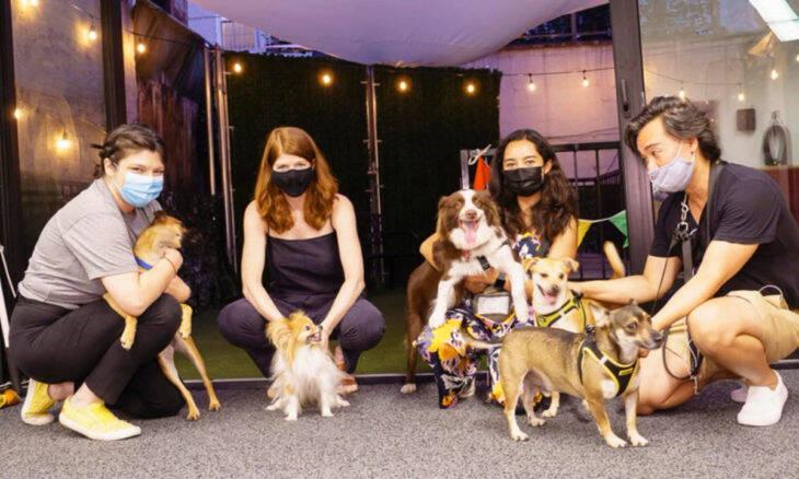 Veja como é a vida nos mais exclusivos clubes caninos nos EUA