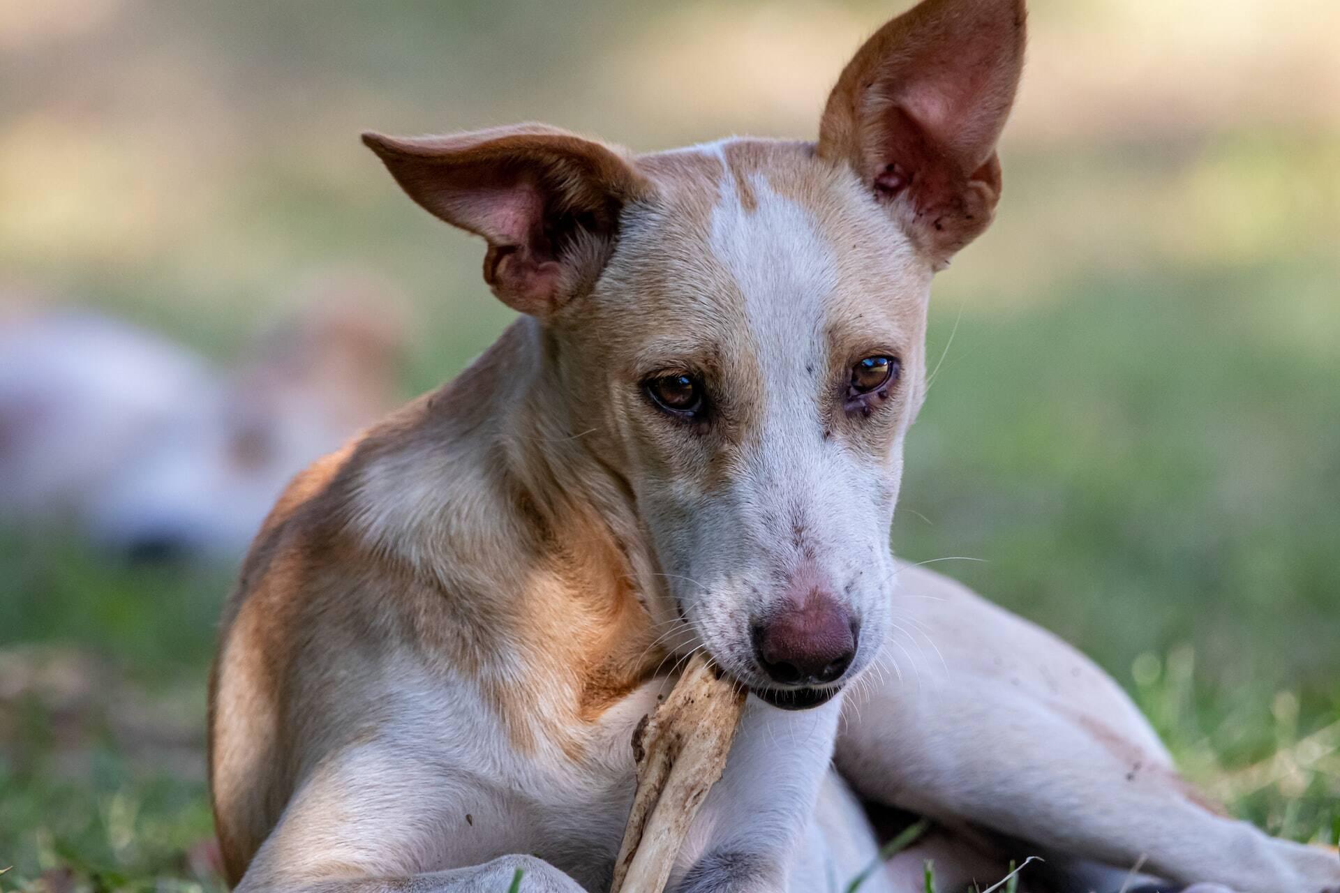 Saiba o que fazer se a urina do seu cão estiver arruinando o quintal de casa