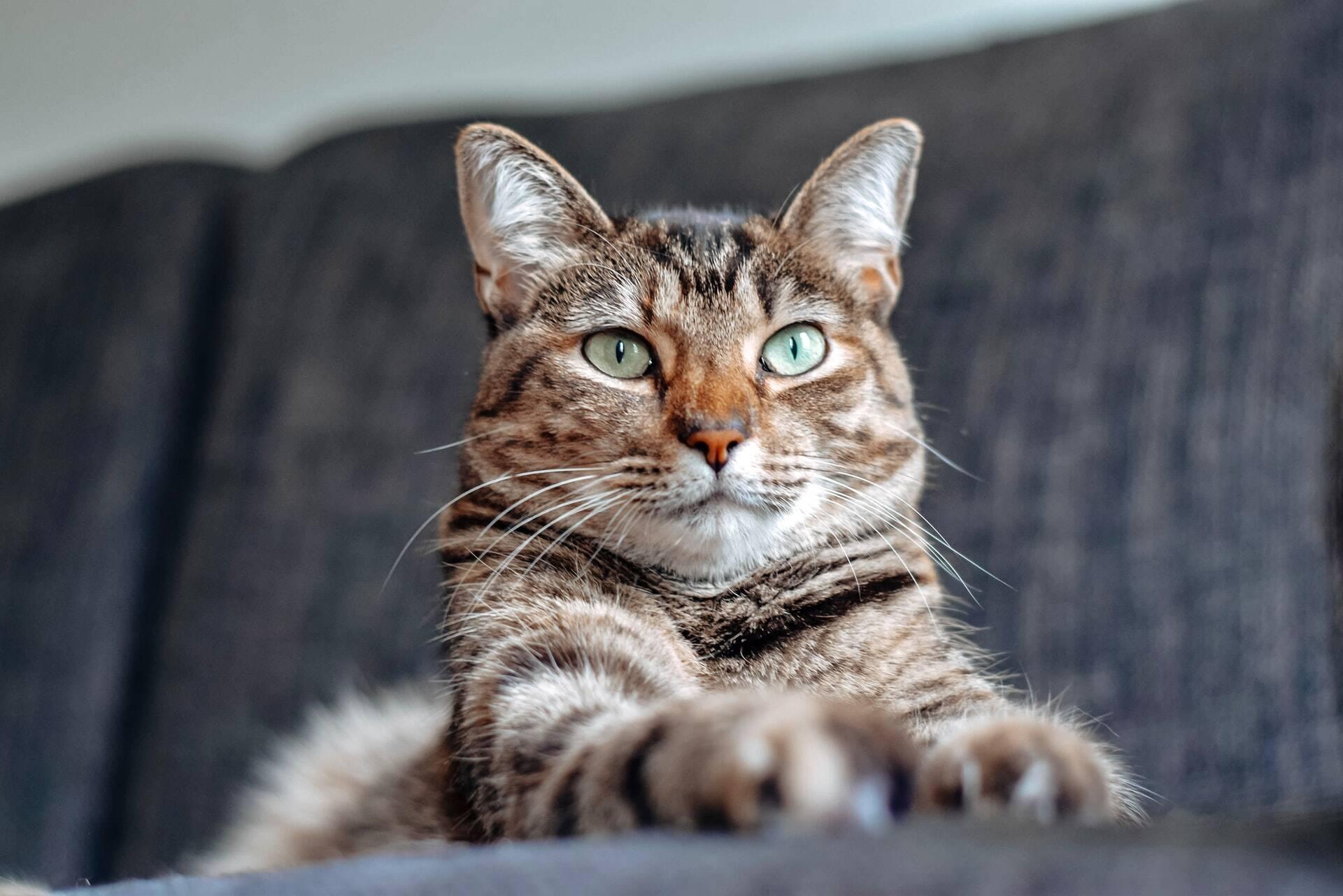 5 coisas que você deve saber antes de adotar um gato